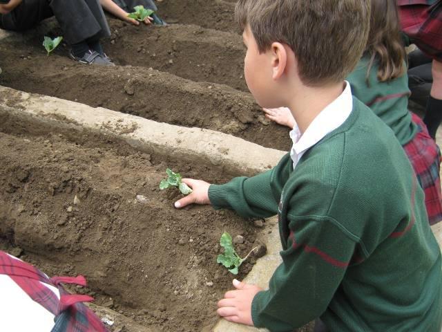 Los alumnos de 2º de Primaria visitan un huerto escolar