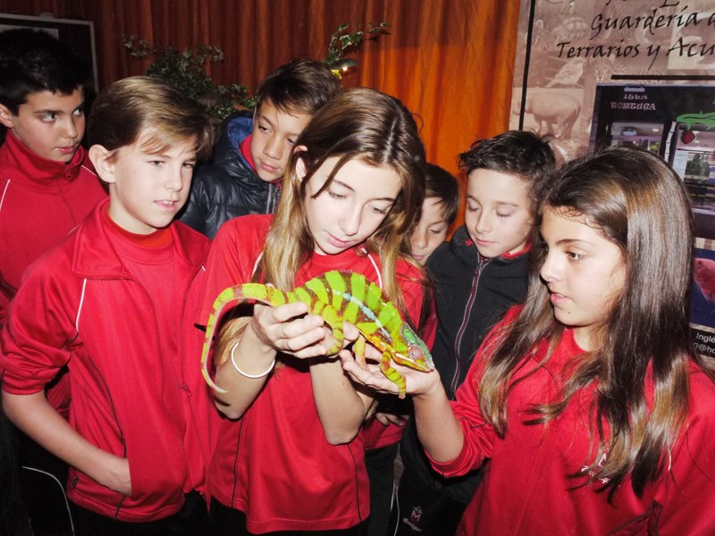 Fauna de los reptiles