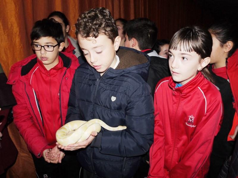 La fauna de los reptiles