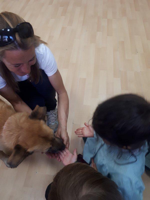 Taller ¿Cómo cuidar a tu mascota?